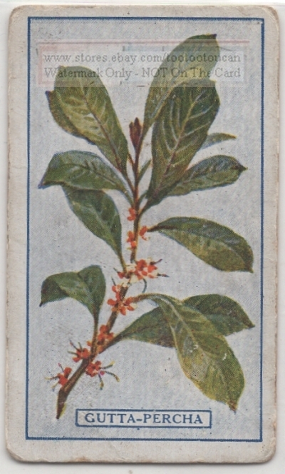 Details about Gutta Percha Latex Tree Malaya Palaquium Rubber 95+ Y/O Trade  Ad Card